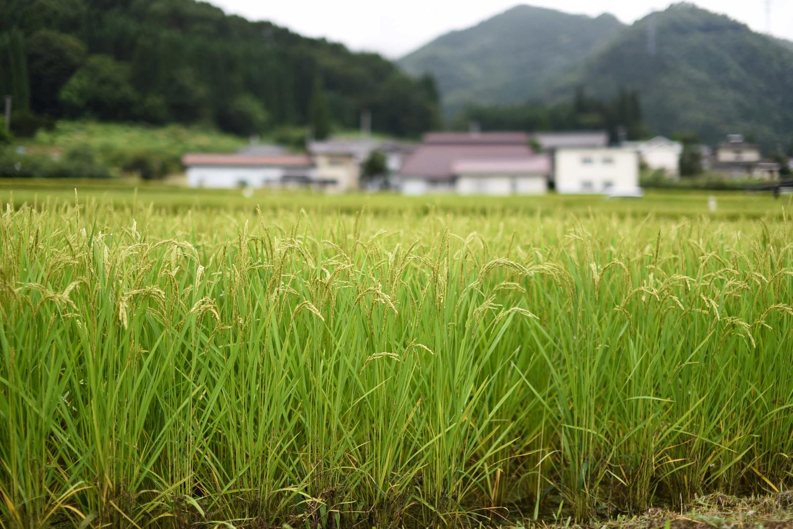 家の話【土地の値段の決まり方】なぜ田舎は安く、都会は高いのか